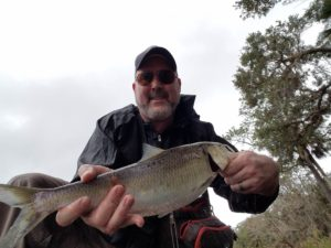 Shad downstream of Snowhill